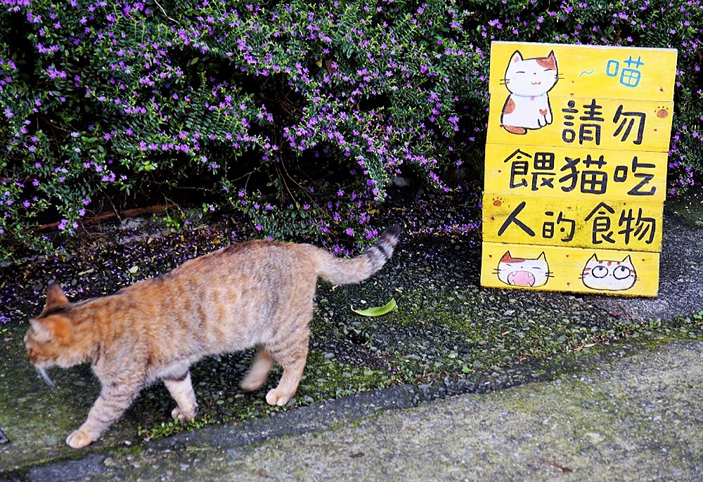 2012 Taipei Yilan Hautong Walk 075