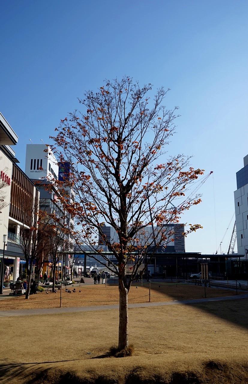 A Walk In Early 2017 Japan Kansai Area 001