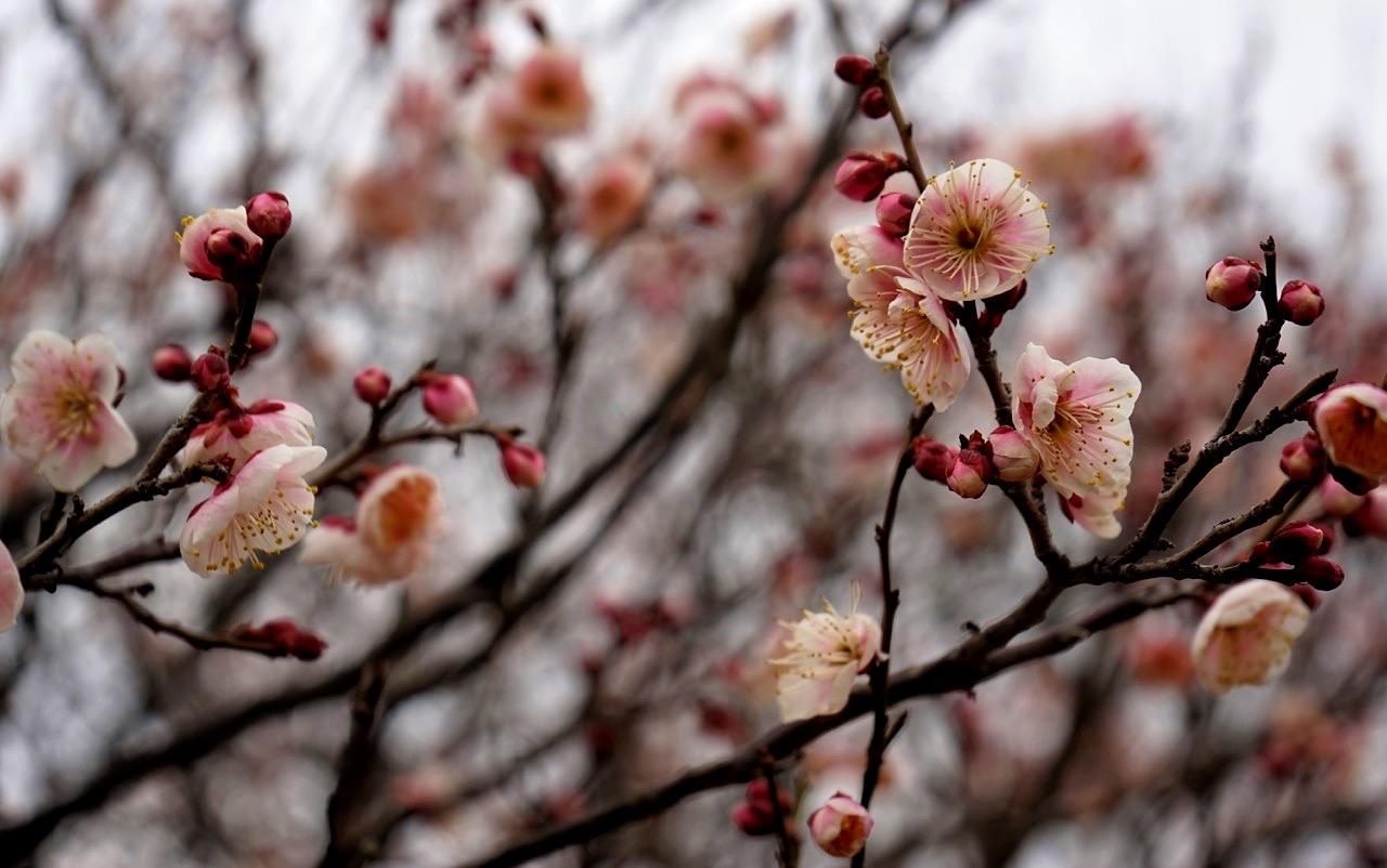 A Walk In Early 2017 Japan Kansai Area 035