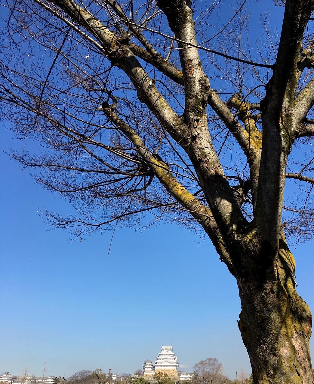 A Walk In Early 2017 Japan Kansai Area 069