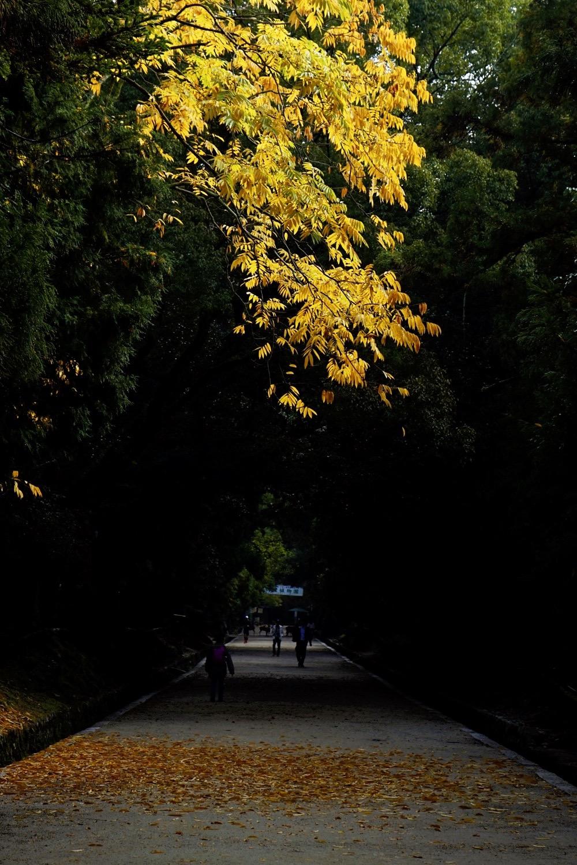 A Walk In Late 2017 Japan Chubu Nara Area 25