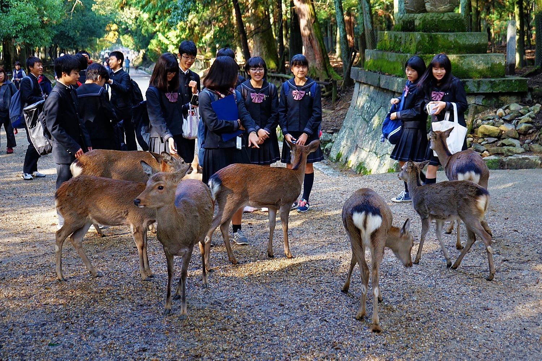 A Walk In Late 2017 Japan Chubu Nara Area 29