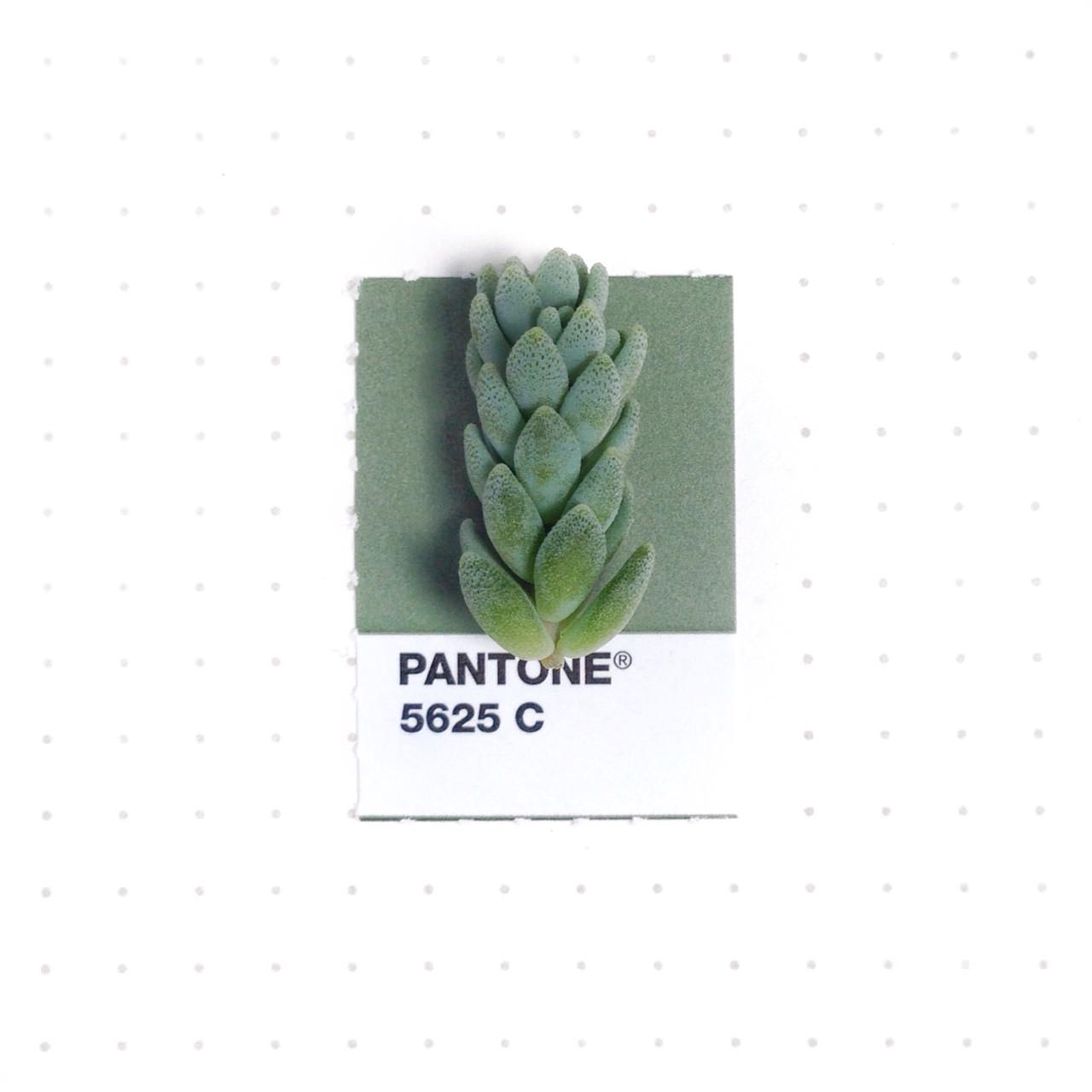 bridging-life-and-design-in-15-pantone-color-matches-07