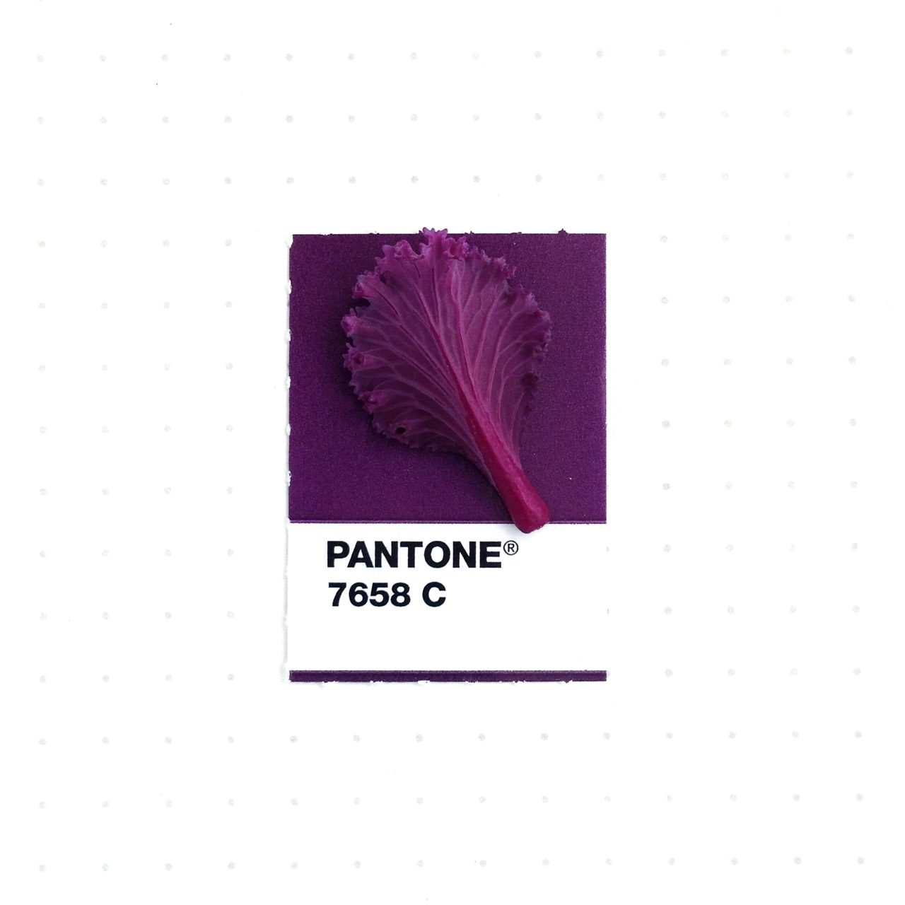 bridging-life-and-design-in-15-pantone-color-matches-13
